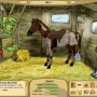 My horse farm - horse game